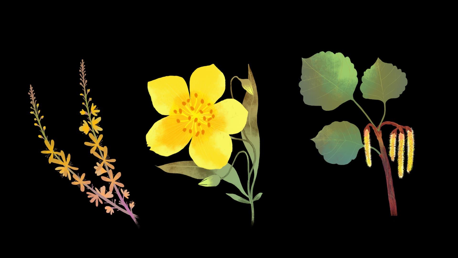 angoisses fleurs bach